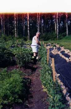 Mom doing her part to weed my brother and sister-in-law's garden. Love her rubber boots!