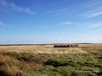 Bales of Hay on Tantramar Marsh