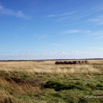 Bales of Hay on Tantramar Marsh